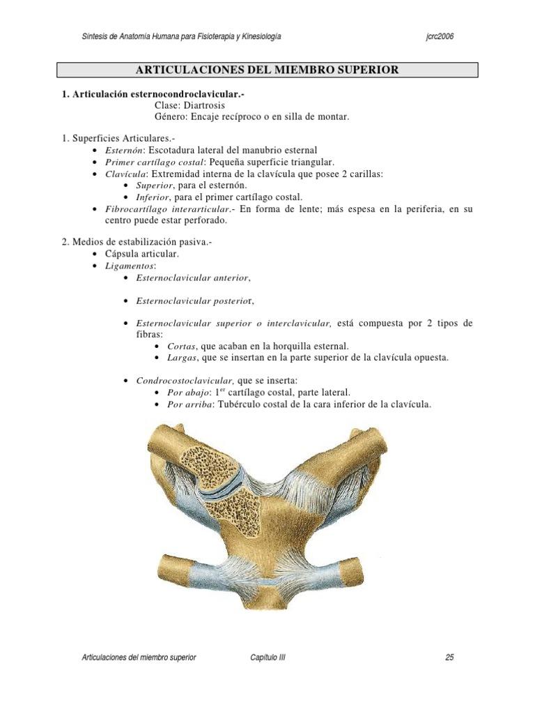 Síntesis de Anatomía Humana para Fisioterapia y Kinesiología