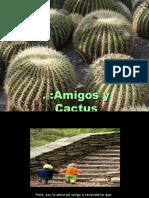 Amigos Cactus