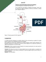Apunte38 Conceptos  Anatómicos y Funcionales Básicos del Aparato Digestivo