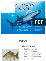 Kind of Fishes in Indoneia