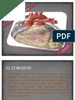 Sistema Cardiovascular Diapositivas!!Ya Casi