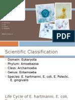 Entamoeba spp