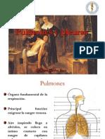 Pulmones_y_pleuras_22_