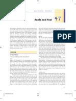 Schreibman CT-MR Ankle-Foot Haaga 08