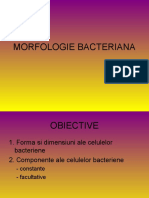 Curs 2 Morfologia Bacteriana