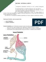 44698756-Anatomia-sistemului-limfatic