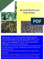 B & G gram PG506