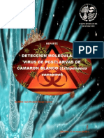 Deteccion Molecular de Virus de Post Larvas de Camaron Blanco