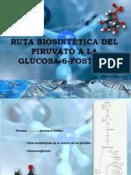 piruvato-glucosa6fosfato