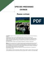 OVINOS_RAZAS_CARACT