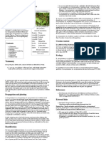 Erythroxylum Novogranatense - Wikipedia, The Free Encyclopedia