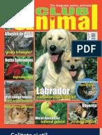 Animal Club Nr. 6
