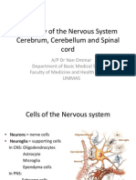 Histology of the Nervous System 2011