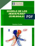 Modelo de Los Hemisferios Cerebra Les