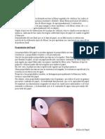 El_papel[1]