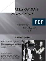 Models of Dna Structures