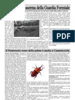 La Rondine - Edizione Marzo e Aprile 2011