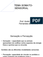 Sistema Somato-Sensorial