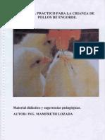 Manual Engorde de Pollos