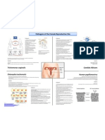 Pathogens of the Female Reproductice Site; Erika Huerta