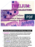 Epithelium Surface Specializations