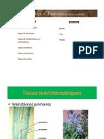 Atlas d'Anatomie Et d'Histologie