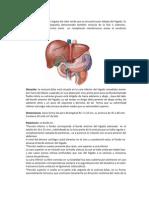 Carcinoma de VeSiCuLa BiLiAr