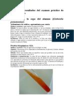 Informe de resultados del examen práctico de Microbiología