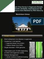 Presentación Mosaico, Maceio 2011