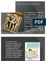 Sexualidad humana_biologia2