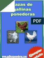 Razas-Gallinas-Ponedoras