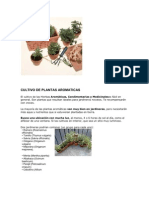 Cultivo de Plantas Aromatic As