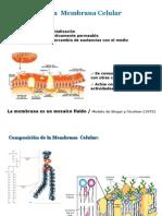 Clase_4_transporte_celular_2010 2