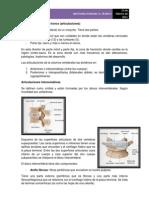 Anatomía humana articulaciones columna vertebral (3ra parte)