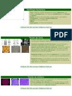 Morfología Bacteriana