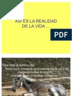Asi_Es_La_Realidad-1900