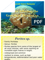 Factors Affecting the Growth of Porites Sp