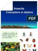 lectie_16_insecte._coleoptere_si_diptere.
