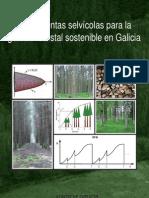 Herramientas selvicolas para la gestión forestal sostenible en Galicia
