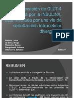 INSULINA 4A - C6