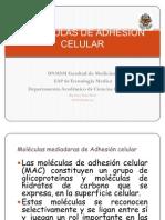 Moléculas de Adhhesión Uniones TM