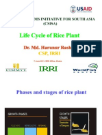 Life Cycle of Rice Plant