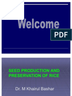 Breeder Seed Production