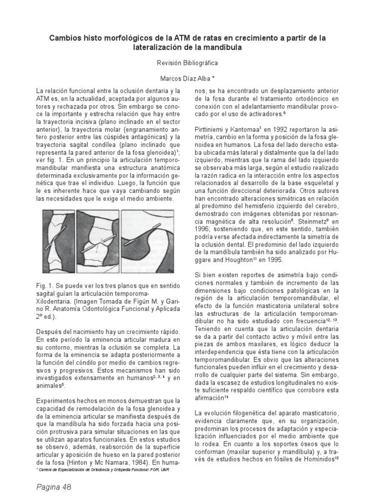 Cambios Histomorfologicos de La ATM de Ratas Ben Crecimiento a ...