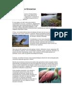 Pantanal Mato