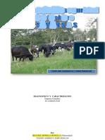 Etapas Previas Al Programa Bioseguridad_EL SAMAN