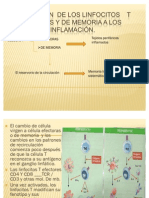 Migración  de los linfocitos    T efectores 25