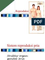 fisiologi reproduksi fkm