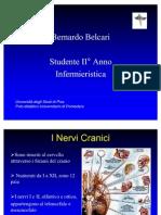 Nervi Cranici - Bernardo Belcari