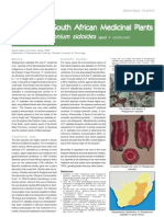 pelargonium sidoides SA 4
